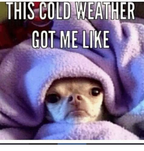 Funny Cold Memes - this cold weather got me like meme on me me