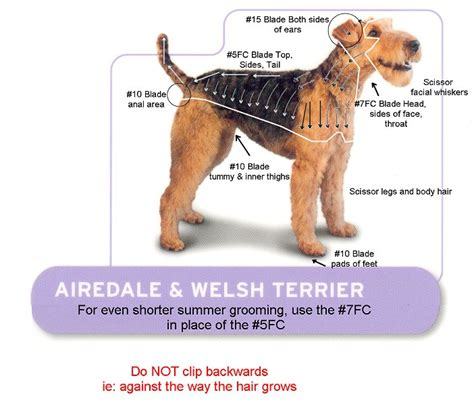 Clipping And Grooming Your Terrier andis clippers