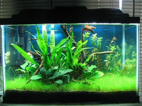 15 Liter Aquarium Bulatfish Bowl 1 1000 images about fish care on betta