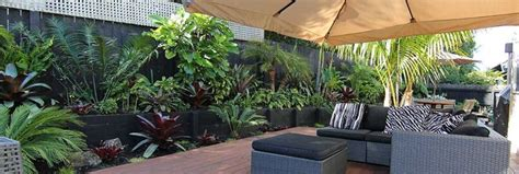 subtropical garden ideas 47 best images about plants and trees on