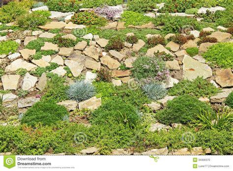 Z Garden by Garden Rockery Stock Photo Image Of Green Plants