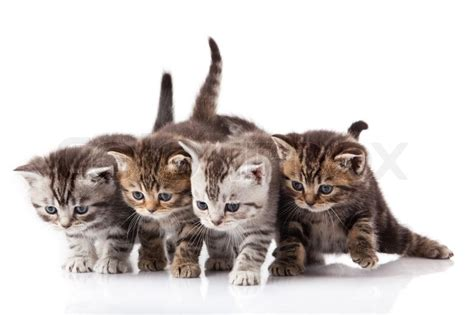 Kittens on a white background   Stock Photo   Colourbox