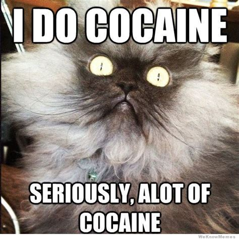 Cocaine Cat Meme - rocks off the rolling stones message board