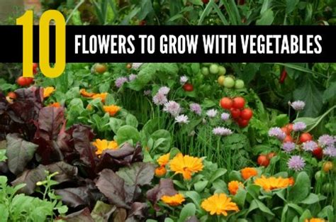 what vegetables can i grow in my garden 10 flowers to grow with vegetables