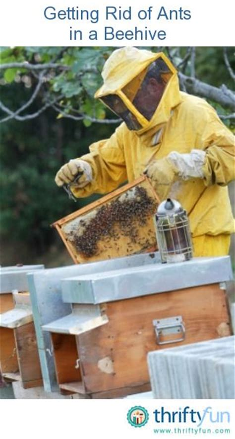 how to get rid of a beehive in your backyard getting rid of ants in a beehive ants and beehive