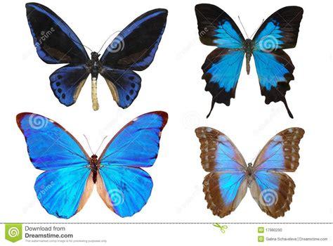 varias imagenes en una foto varias mariposas foto de archivo imagen 17980290