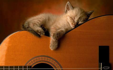 cat guitar wallpaper kat ligt te slapen op gitaar mooie leuke achtergronden