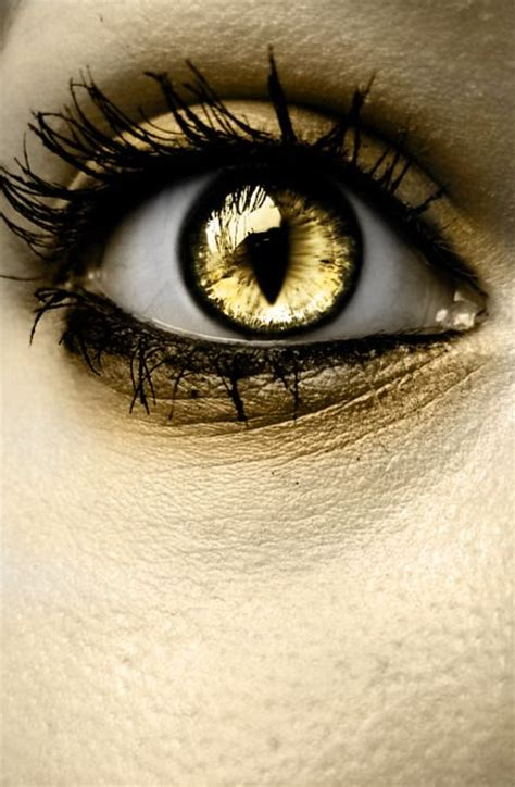 gold colored contacts my discovery how i lived without these