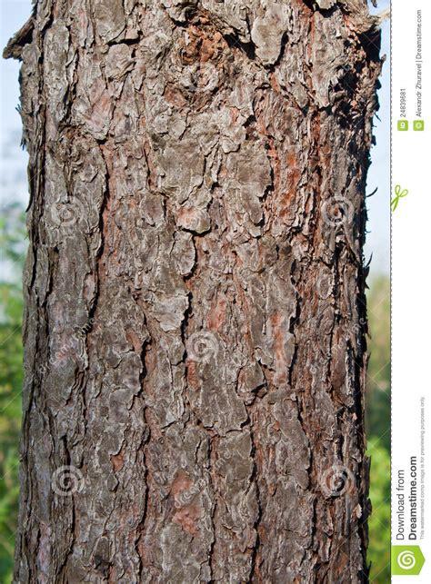 texture pine tree bark stock image image 24839681