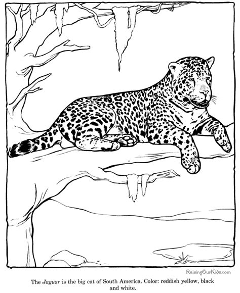 free printable coloring sheets zoo animals free zoo animal coloring pages coloring home