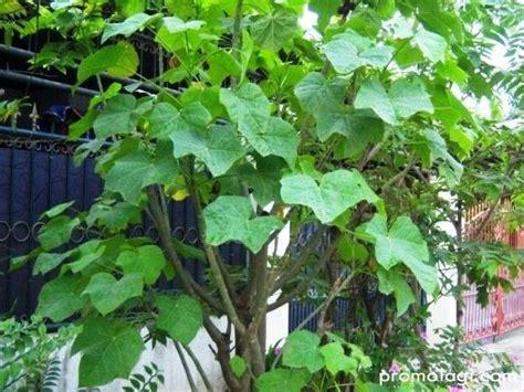 gambar rumah pohon blog images