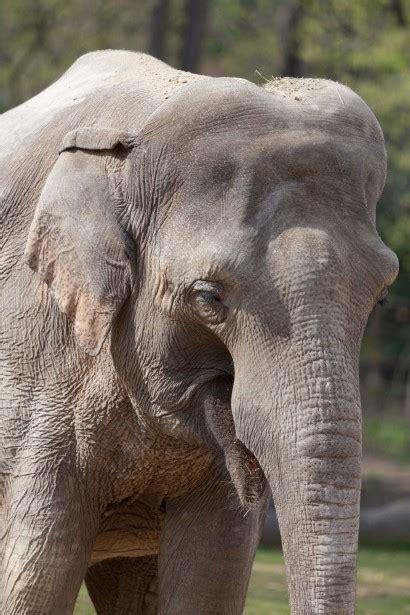 elephant  stock photo public domain pictures