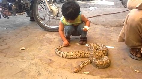 baby playing  real snake abbas  snake youtube