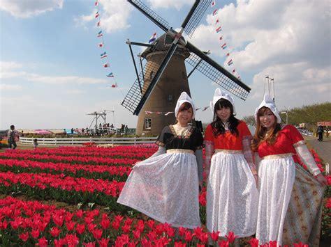 sakura tulip festachibajapan travel guide   fun