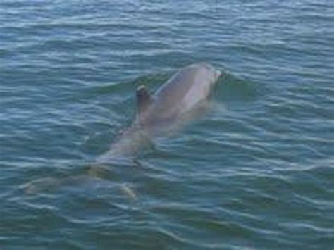 dolphin boat rental marco island dolphin picture of rose marina boat rentals marco