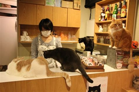 Montreal And Oakland Enter Race To Open North America's First Cat Cafe