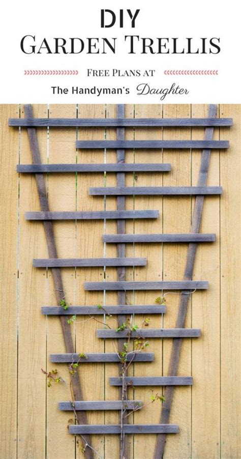 diy trellis plans how to choose the best climbing vines for a trellis the