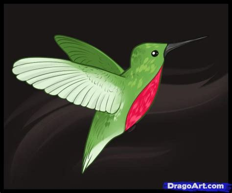 how to draw hummingbirds doodles pinterest