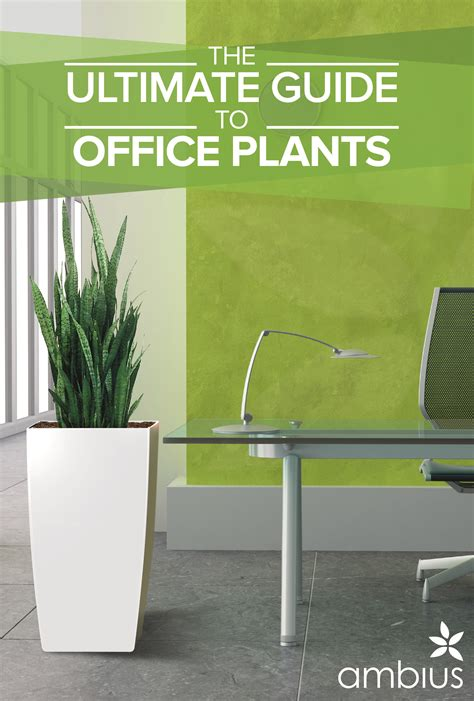 plants for office the ultimate guide to office plants