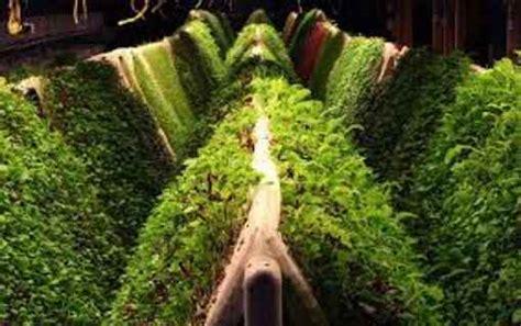 self sustaining garden backyard aeroponics hydroponic and aquaponic garden self