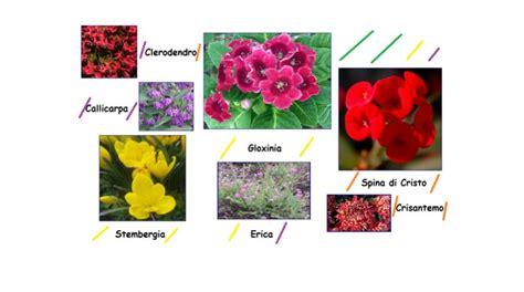 fiori a novembre i fiori e le piante di novembre giardino regali cerimonie