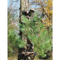 Tree stands tree stand accessories 4 pk tree stand branch