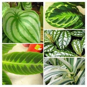 house plants guide  tips houseplantsexpertcom