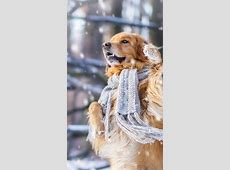 Wallpaper dog, cute animals, snow, winter, 4k, Animals #17412 Yellow Abstract Background