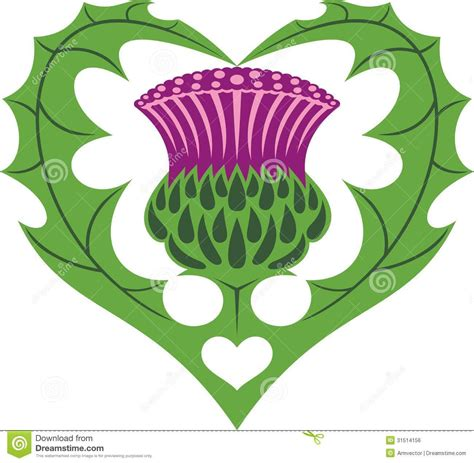 royalty tattoos scottish thistle royalty free stock image