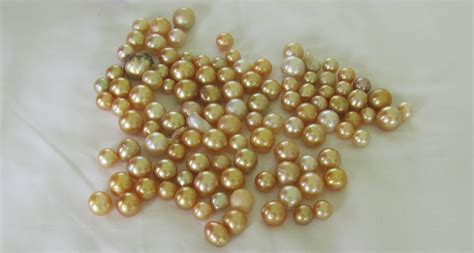pearls with gold pearls into gold gold pearls south sea pearls yellow