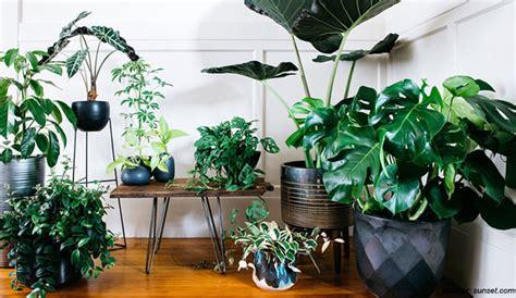 merawat tanaman hias indoor sederhana efektif