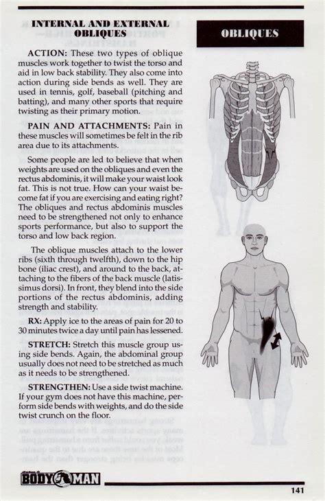 obliques internal  external