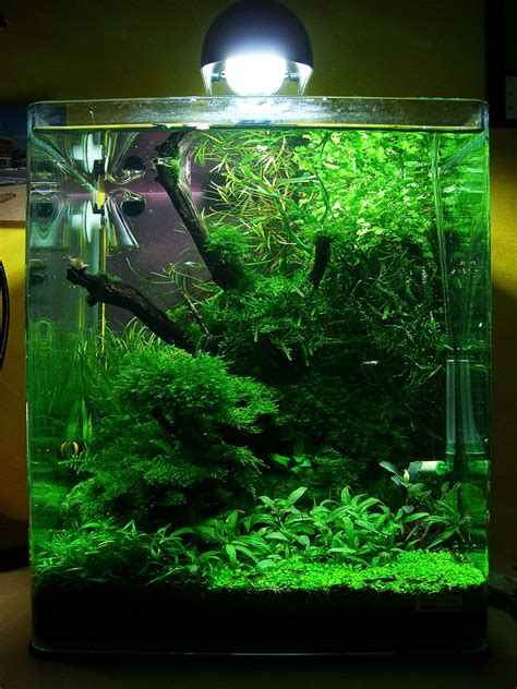 cube aquarium aquascape the world s best photos of 30l and nano flickr hive mind