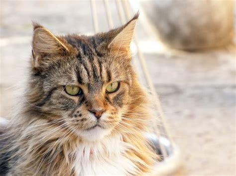 vomiting and diarrhea not causes of vomiting diarrhea in cats canna pet