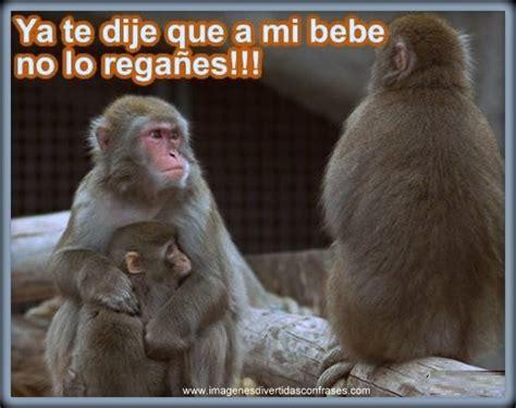 im 193 genes de monos chistosos con frases imagenes graciosas de changos imagenes divertidas con frases