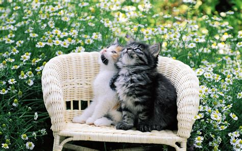 cat in backyard pretty kittens in yard kittens wallpaper 13938013 fanpop