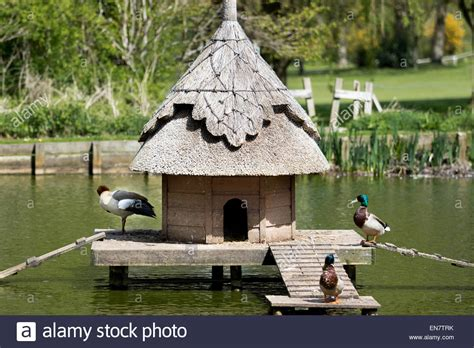 Ducks On A Duck House In A Village Pond Stock Photo