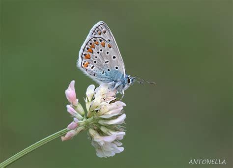farfalla fiore un fiore di farfalla foto immagini macro e