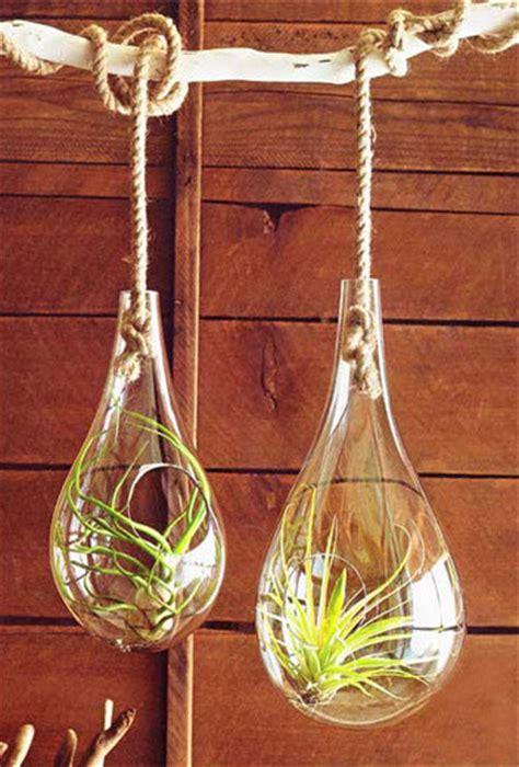 glass hanging terrariums modern terrariums by aha