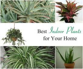 Inside Plants Best Indoor Plants Related Keywords Amp Suggestions Best