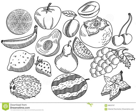 fruit zentangle fruits coloring book vector for adults stock vector