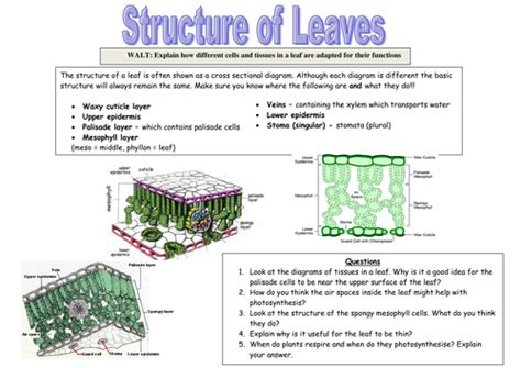 structures of photosynthesis worksheet worksheets photosynthesis