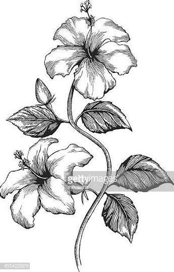 30+ Ide Sketsa Bunga Sepatu Dan Bagiannya - AsiaBateav