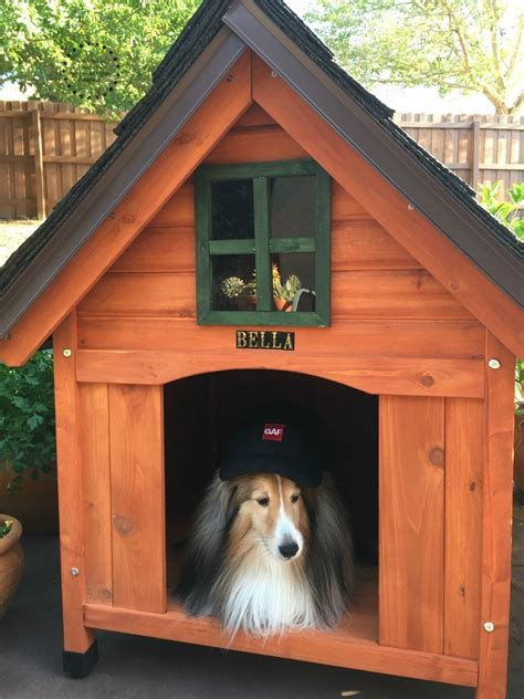 building   dog house adrianas  recipes