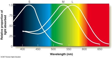 trichromatic theory of color vision opinions on trichromacy