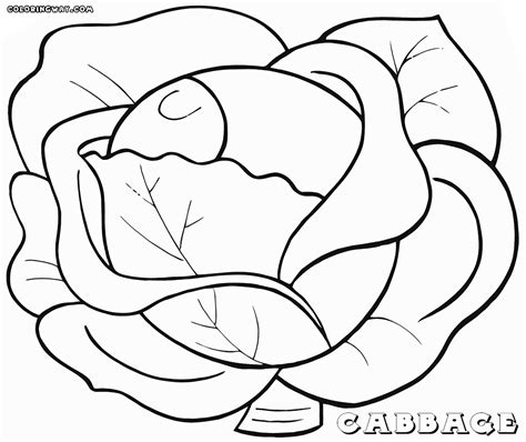 cabbage coloring pages coloring pages to download and print