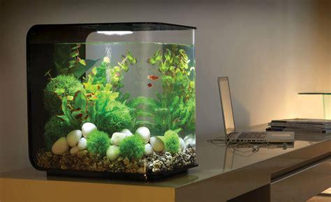 acquario casa sentiti come un pesce nell acqua con un acquario in casa