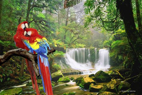 most beautiful size hd wallpapers most beautiful parrot hd wallpapers parrot hd pictures