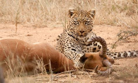 4 day tanzania cing serengeti and ngorongoro crater