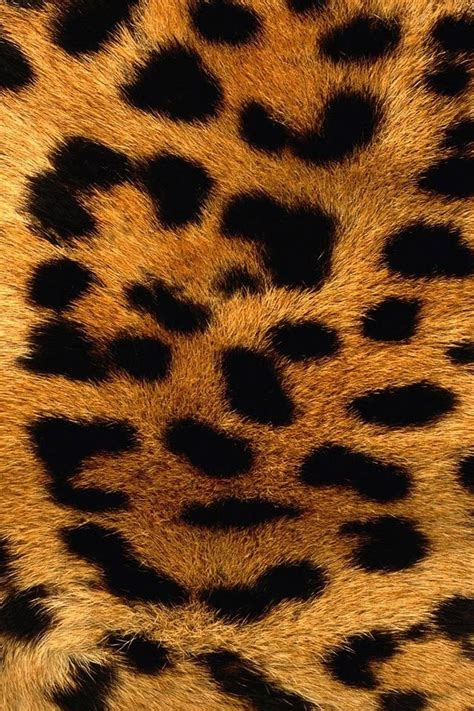 leopard wallpaper pinterest leopard skin iphone wallpaper i have this and a leopard